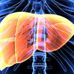 De lever zuiveren: hoe kan je dat doen ?